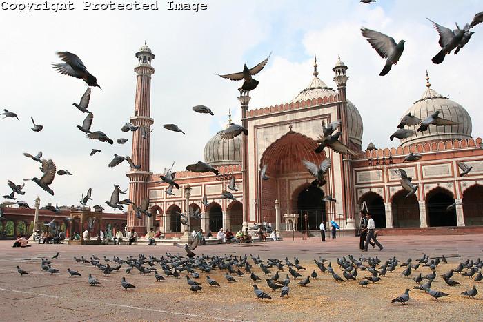 jamil-masjid-delhi
